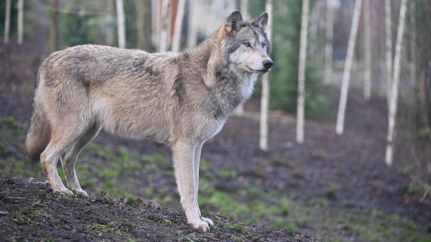 Profile photo of Crywolf